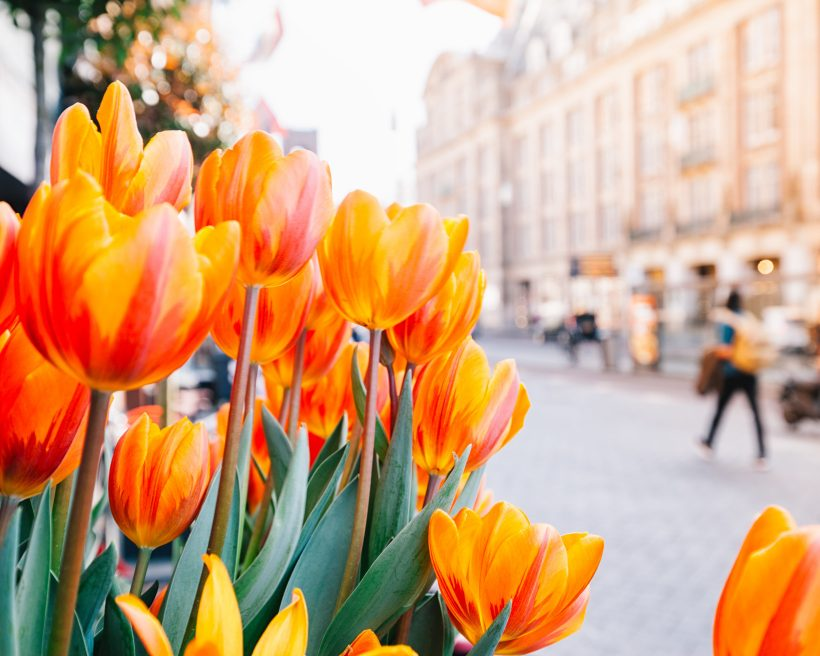 Tulppaanimatka Hollantiin: keväiset nähtävyydet Amsterdamissa ja ympäristössä