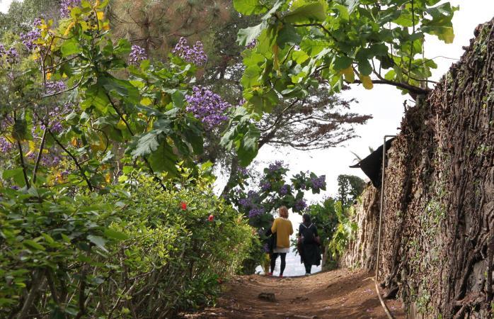 Madeiran sää on lämmin ympäri vuoden