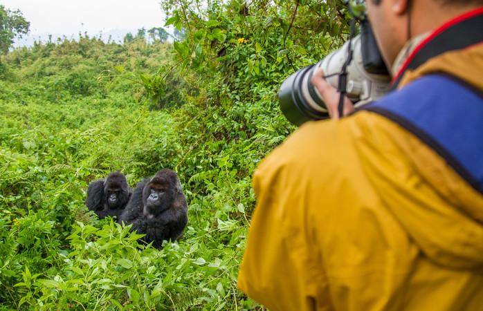 Vuorigorilloja Ruandassa, yhdessä nousevista matkakohteista, jonne suomalaiset matkustavat